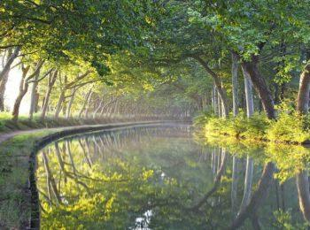 discover The Canal du Midi by River Boat by sailing in a self drive barge Canal du Midi / Camargue